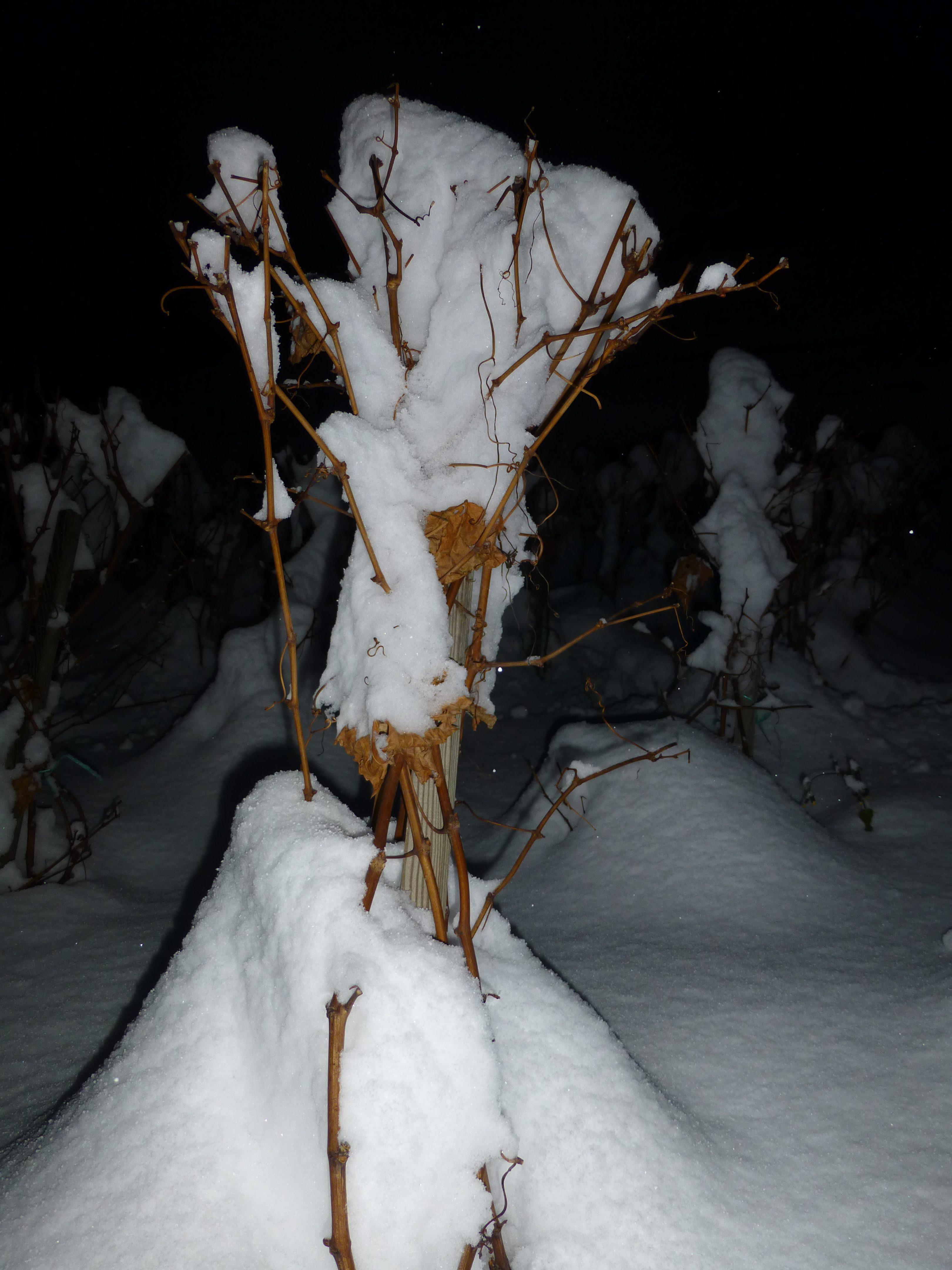 1-cep-en-hiver
